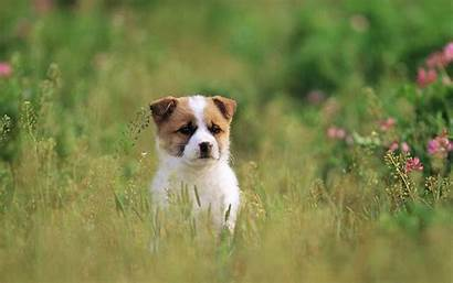 Dogs Puppies Wallpapers Dog Puppy Grass Lovely