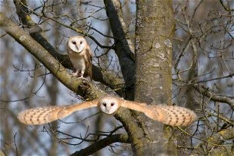 barn owl habitat barn owl habitat