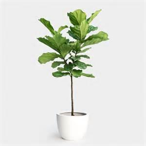 flower basket fiddle leaf fig tree greenery nyc