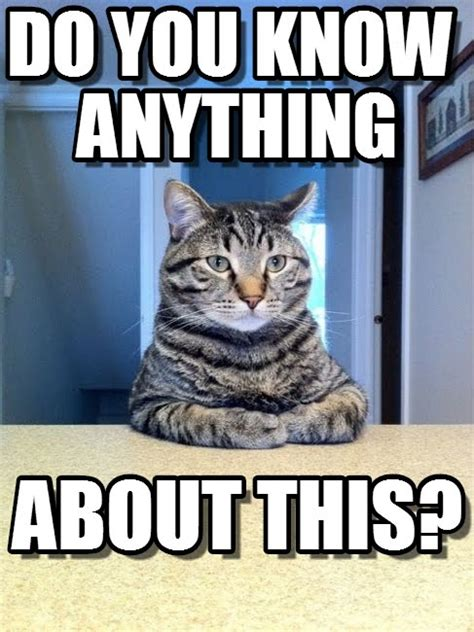 You Know What To Do Meme - do you know anything take a seat cat meme on memegen