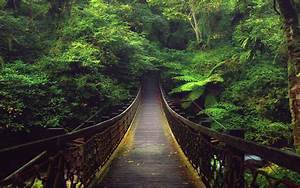 Forest Bridge HDwallpaperUP