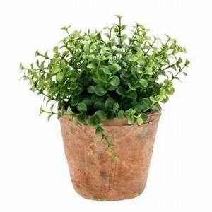 Eucalyptus En Pot : hobby kunstplant eucalyptus groen oude terracotta pot ~ Melissatoandfro.com Idées de Décoration