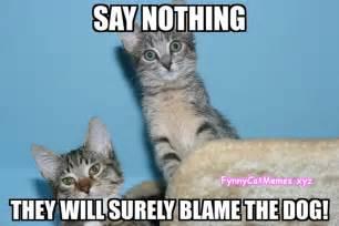Funny Cat Dog Memes