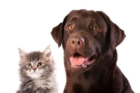 The waiting periods with pets best are some of the most reasonable in the pet insurance industry, too, requiring only three days for accidents, 14 days for illnesses, and six months. How To Introduce Cats and Dogs - And Make Sure They Get Along in 2020 | Pet insurance reviews ...