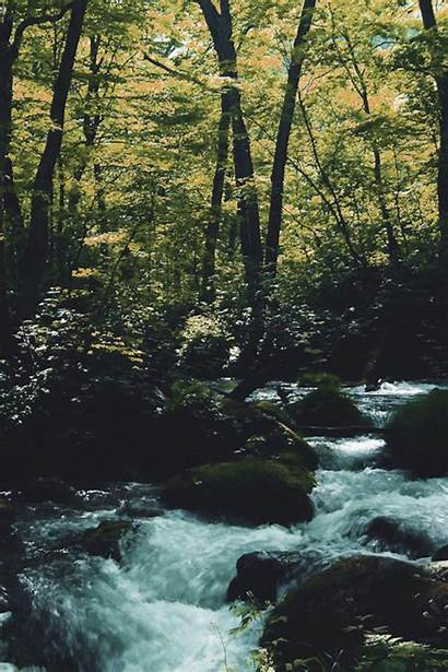 Forest Gifs Vertical Nature Water Landscape Animation