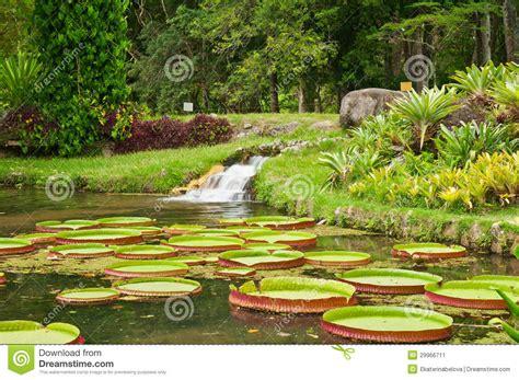 de brazil palm gardens de brazil palm gardens palm