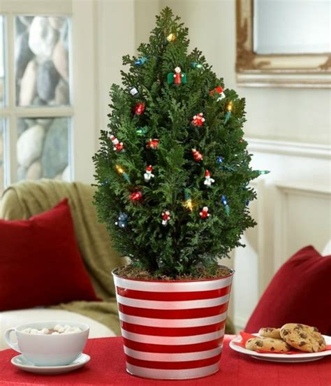 weihnachtsb 228 ume kaufen was sie bei der wahl beachten sollen