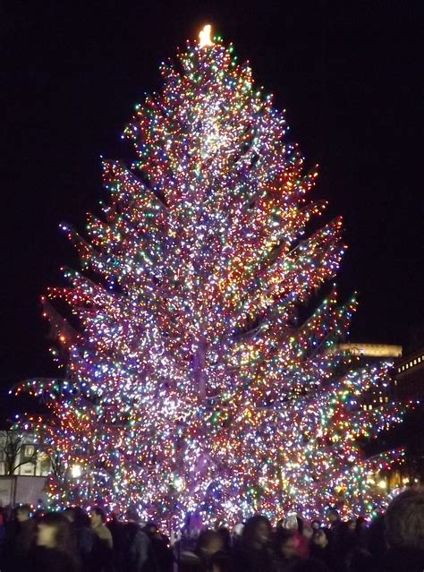 christmas lights in trees outdoor artificial christmas trees with lights christmas