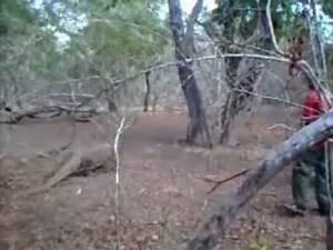 Komodo Dragons eat man alive! - YouTube
