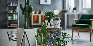 Gr ner wohnen pflegeleichte pflanzen f r jedes zuhause for Pflanzen für zuhause
