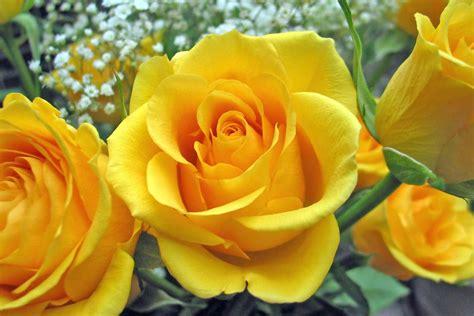 We did not find results for: Gambar-Gambar Bunga Mawar Yang Indah - Gambar Foto Wallpaper