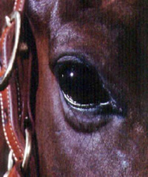 eyes horses discharge horse equine vision diseases equusmagazine