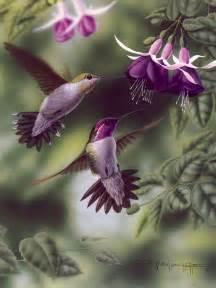 Beautiful Purple Hummingbird