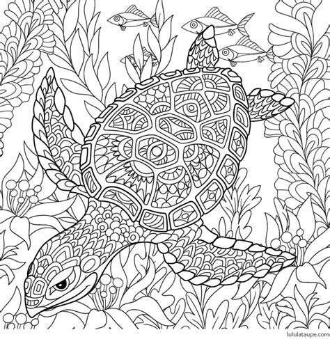 coloriage antistress une tortue marine lulu la taupe