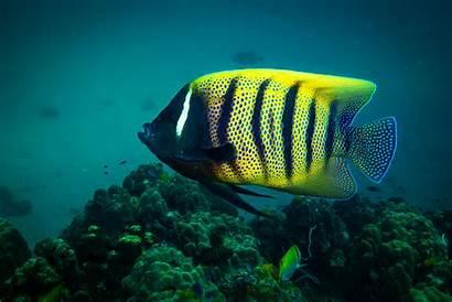Fish Exotic Saltwater Aquarium