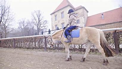 Horse Training Riding Footage Care Wide Horseback
