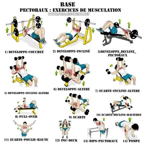 Largest range of free workout routines available! How different #chest #exercises work your muscles. | Chest ...