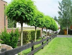 Bäume Für Den Garten : herzlich willkommen f r sie gelesen ~ Lizthompson.info Haus und Dekorationen