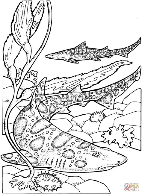 leopard sharks coloring page  printable coloring pages