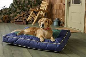 5, Best, Indestructible, And, Comfy, Dog, Beds, For, Heavy, Chewers