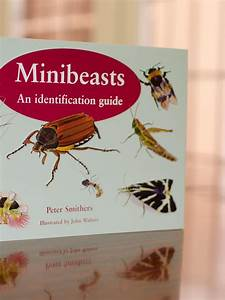 Minibeasts  An Identification Guide