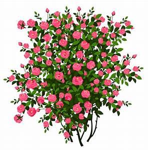 Rose bush clipart - Clipground