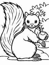 Squirrel Coloring Eating Printable Hungry Squirrels Acorn Colouring Drawing Colornimbus Sheets Colorings Getcolorings Scaredy Getdrawings Templates sketch template