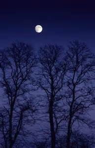 Full Moon Winter Night Sky