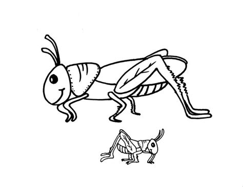 grasshoppers coloring pages    print