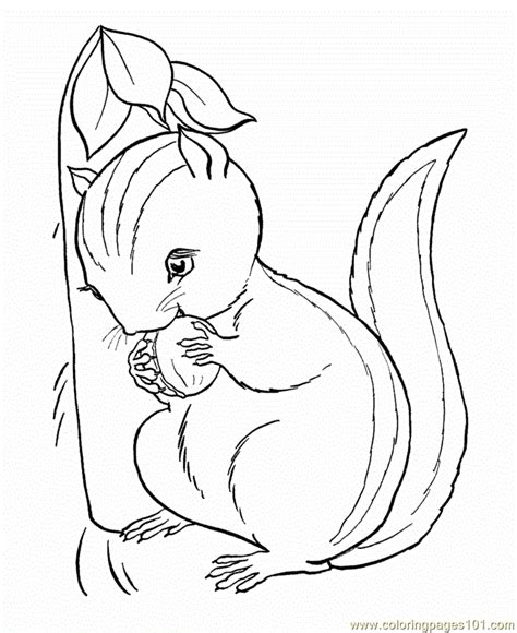 squirrel coloring page  squirrel coloring pages coloringpagescom
