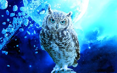 Background Owl Wallpaper by Owl Wallpaper Backgrounds 67 Images