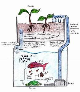 Aquaponics Diagram