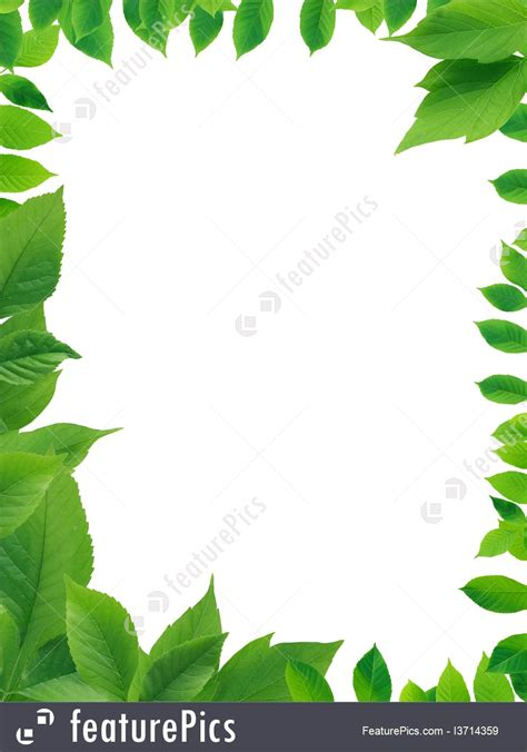 framing leaves picture of green leaves frame