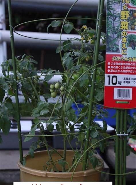 jual penyangga tanaman hidroponik  cm tanaman