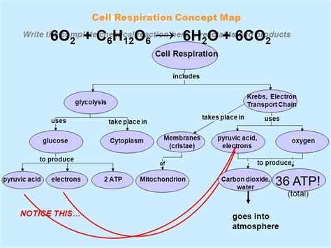 Notes On Photosynthesis  Ppt Download