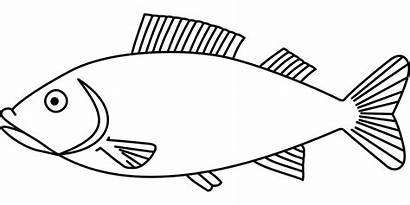 Coloring Pages Fish Fisch Fishing Malvorlage Bass