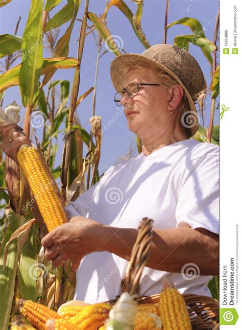 Elderly Woman With Maize Royalty Free Stock Image - Image
