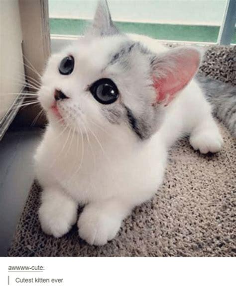 Cute Kitten Memes - awwww cute cutest kitten ever cute meme on sizzle