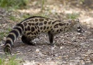 Pet Genets: Diet, Behavior and Healthcare
