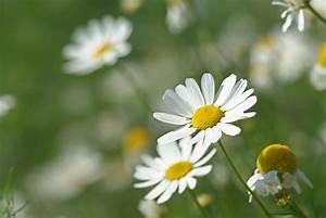 Welche Blume Steht Für Leben : blumen a z ~ Whattoseeinmadrid.com Haus und Dekorationen
