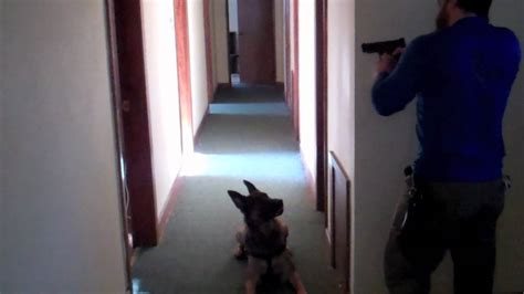 canine tactical building search  home protection movement youtube