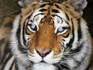 Crown Ridge Tiger Sanctuary — Come see where the big cats ...