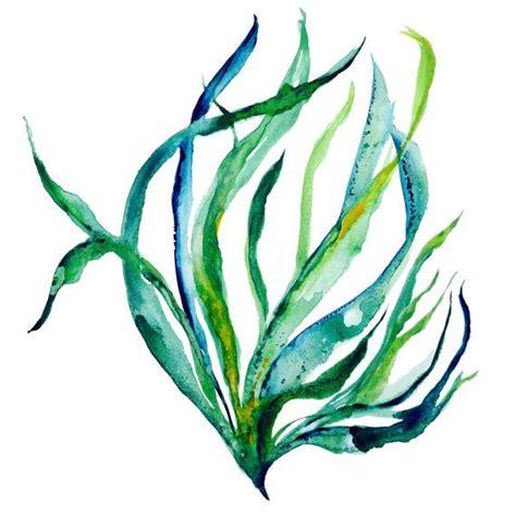 seaweed color sway seaweed illustration sea botanical