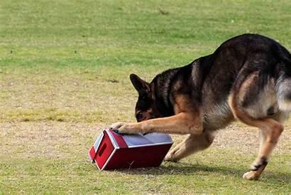 Things Training Dog Train