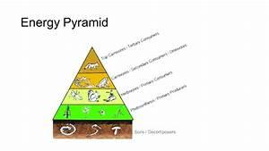 Energy Pyramid Diagram Related Keywords