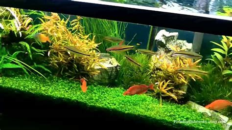 fertilizing a planted aquarium greenhouse aquariums