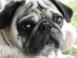 encephalitis brain inflammation dogs