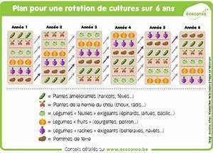 Plantes Amies Et Ennemies Au Potager : comment pratiquer la rotation des cultures au potager ~ Melissatoandfro.com Idées de Décoration