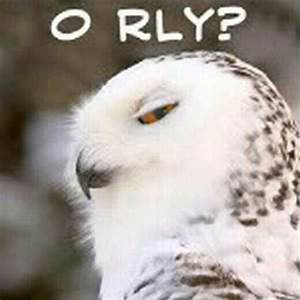 Funny owl | Owls | Pinterest | Funny, Owl and Funny owls