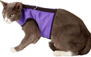 cat harness kitty holster cat harness purple small medium chewy
